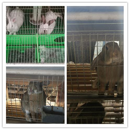 河南省卢氏市哪里有种兔养殖场包回收