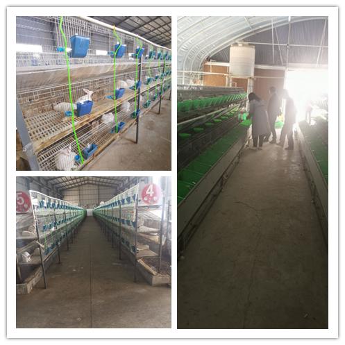 辽宁省盘山县兔子养殖场种兔基地哪里有