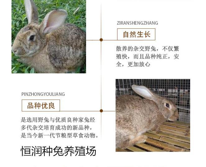 鹰潭市兔子养殖场哪里有