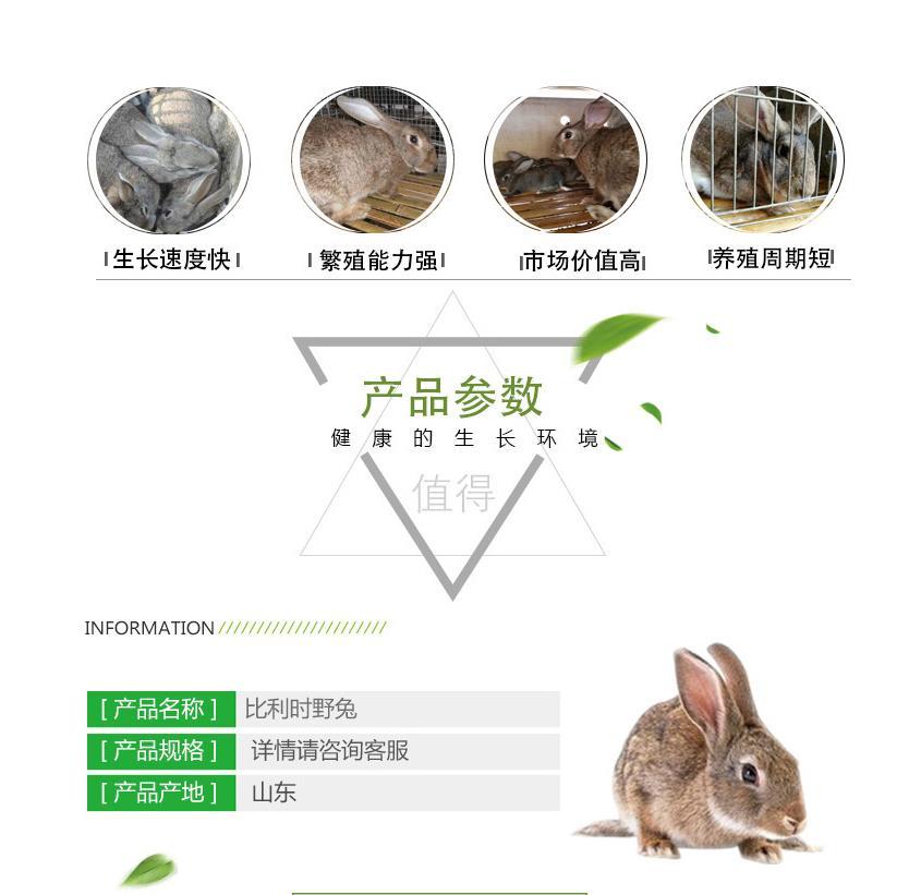 广东省紫金县当地卖肉兔种兔的养殖场
