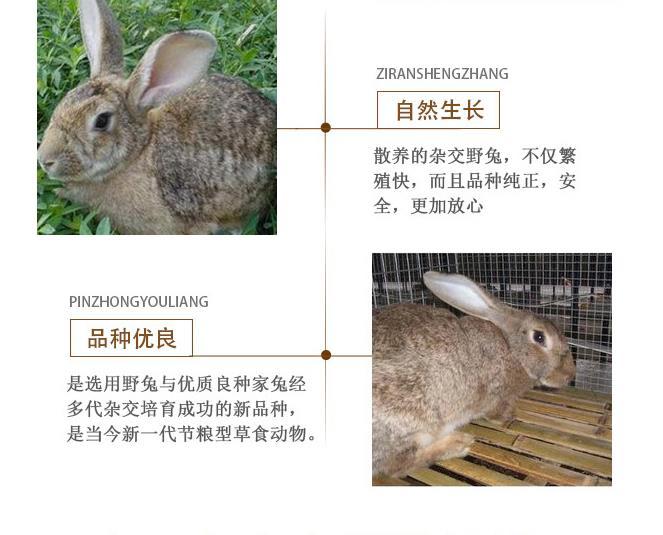 宁德市附近卖肉兔种兔的养殖场