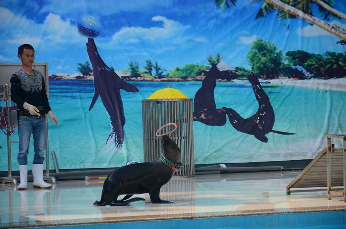 平湖美人鱼表演出租活动方案策划