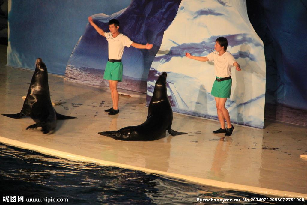 赣州市鳄鱼海狮表演租赁追求完美