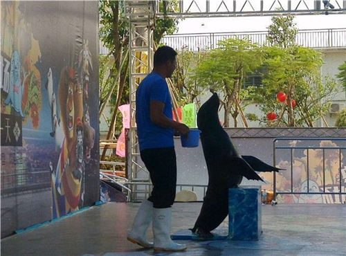 淮安羊駝出租展覽海獅表演