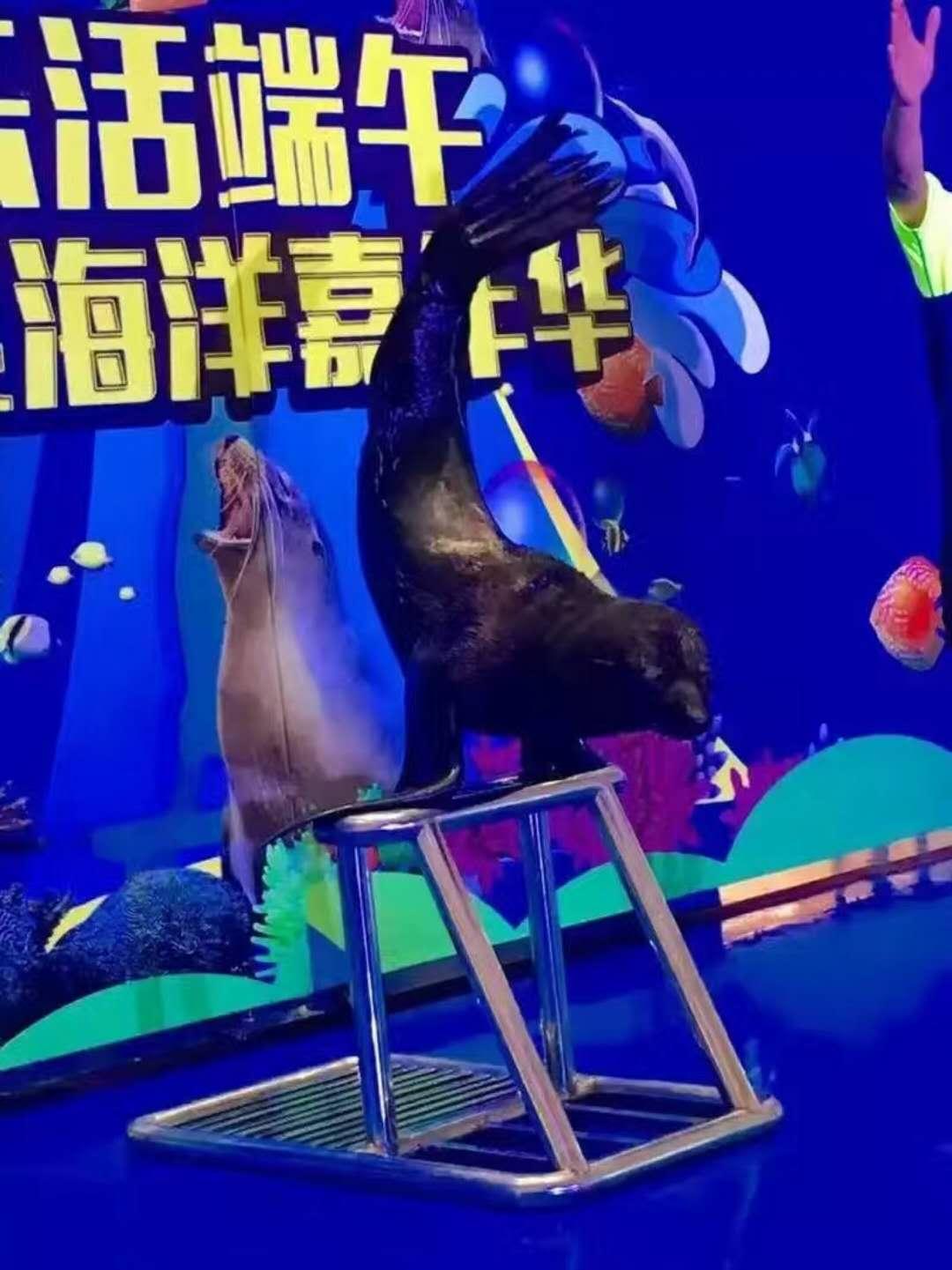 淮北市海洋生物展出租现有档期