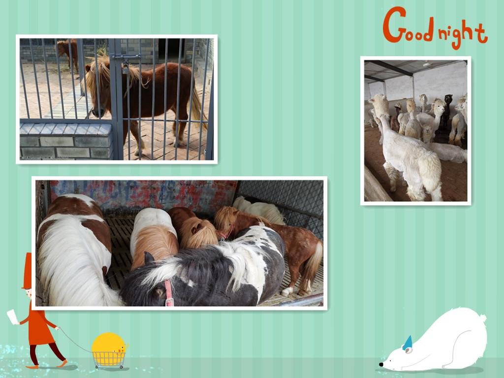 福安市羊驼出售