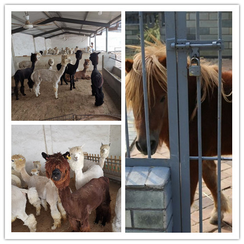松原市哪里的矮马价格实惠