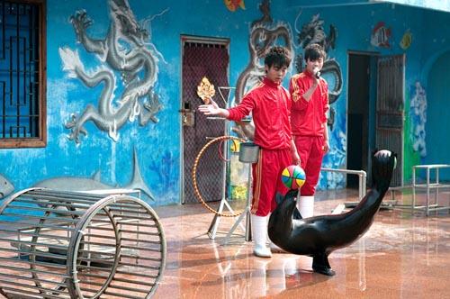 屏南县哪有出租海洋动物的公司哪里有