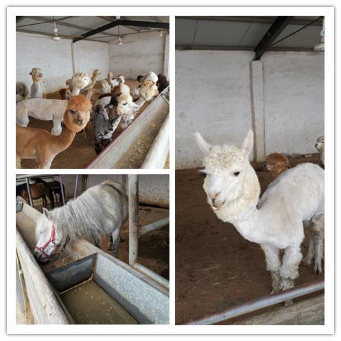 随州市哪里有出售羊驼养殖场的