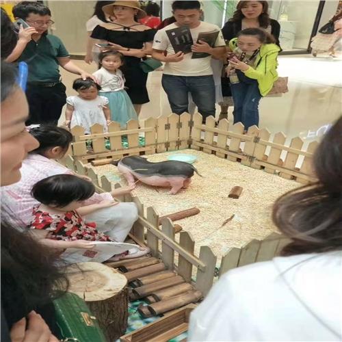 巴彦县羊驼斑马展览出租