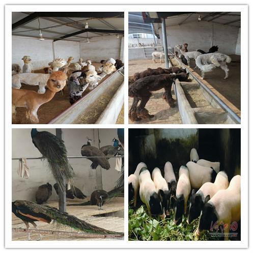 濮阳市周边哪里有卖进口矮养殖场