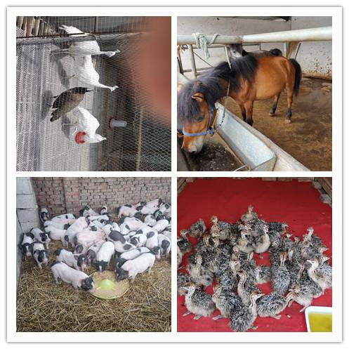 魏 县附近有卖鸵鸟孔雀苗的吗