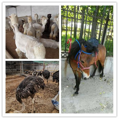 丽江市哪里有出售矮马养殖场的
