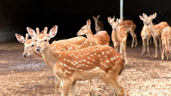 哪里有回收梅花鹿的广州
