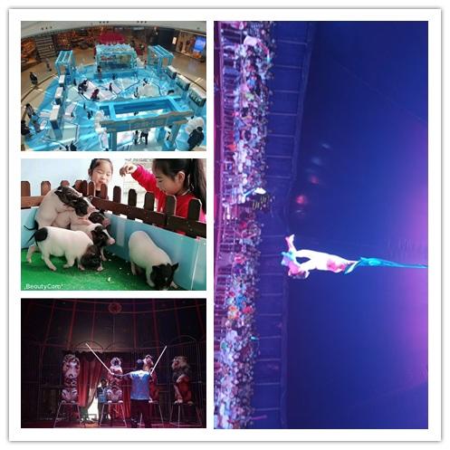 宜州市杂技马戏团表演出租有没有