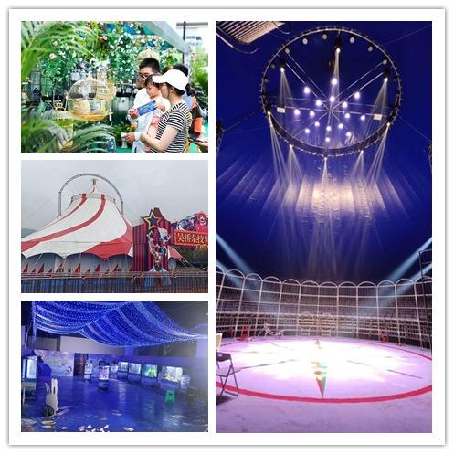 扎兰屯市哪里有海狮表演租赁