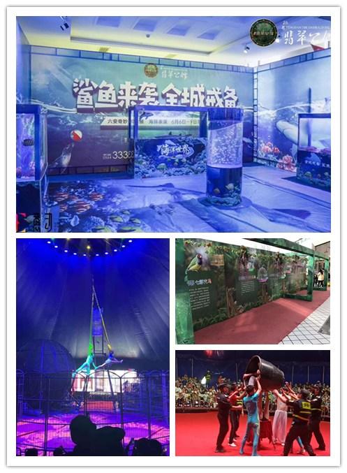 牡丹江市海狮表演租赁