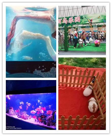 苏尼特左旗小马戏表演出租两个鱼演员在玻璃大缸里表演