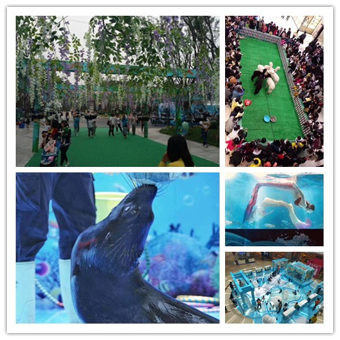 莱芜市杂技表演租赁有羊驼和小马展览的活动