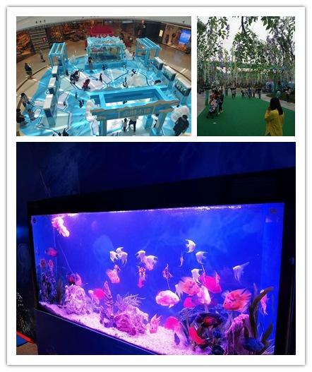 安庆市同城海狮表演出租