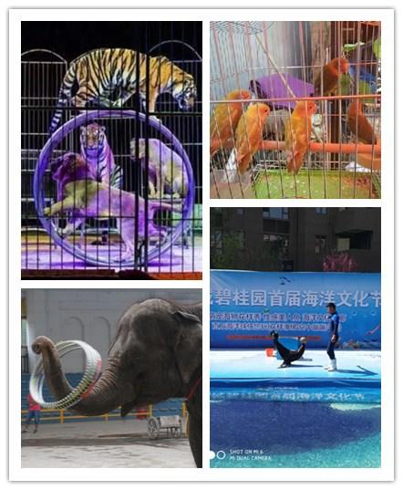 郴州市萌宠动物出租