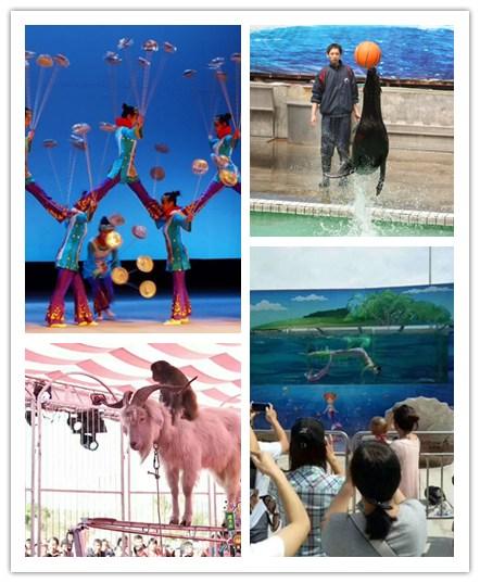 安庆市海狮表演租赁