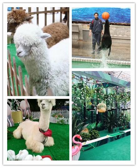 牙克石市什么地方有海狮表演出租企鹅的春节预定