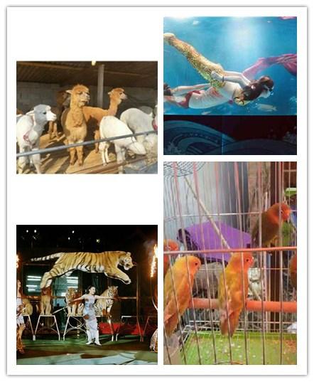 本地萌宠动物羊驼展表演出租黄石市