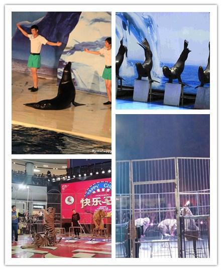 福清海狮表演出租什么地方有