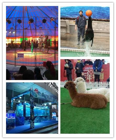 防城港市萌宠动物羊驼展出租正规公司