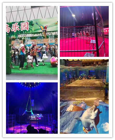 枝江市鳄鱼表演团队周边