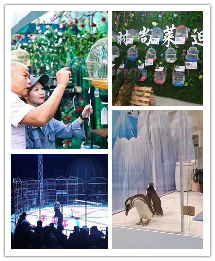 万宁市哪里有海狮表演出租
