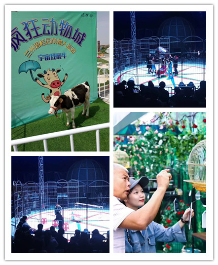 马戏团表演出租附近贵阳市