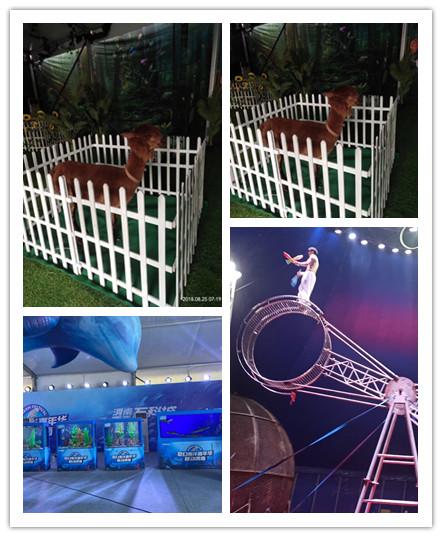 安庆市马戏团表演出租
