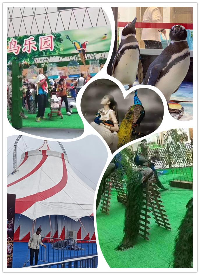 广汉市马戏团表演出租