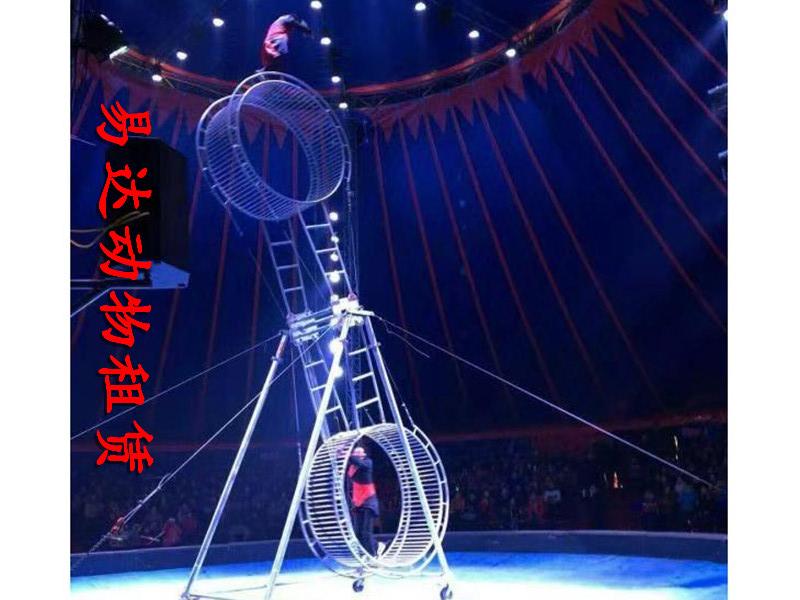 小马戏表演出租租赁鱼租赁一手资源,洛阳