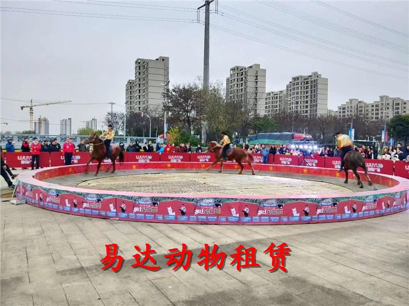青海联系方式矮马出租租赁欢迎来电,