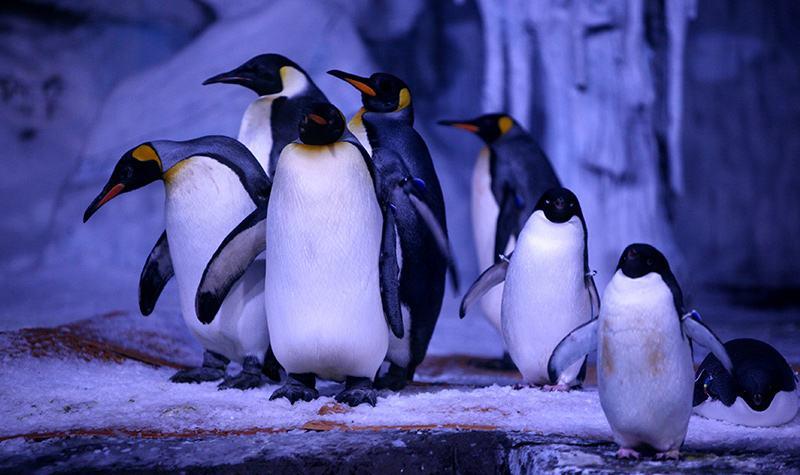 南平建瓯企鹅展览出租