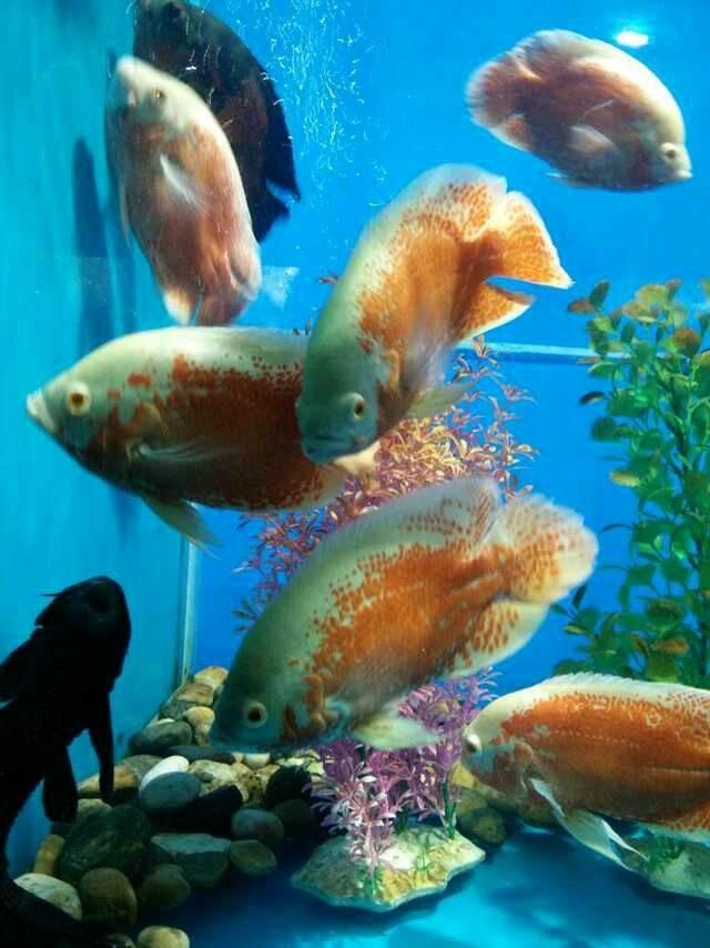郴州桂阳县海洋生物鱼缸展览出租