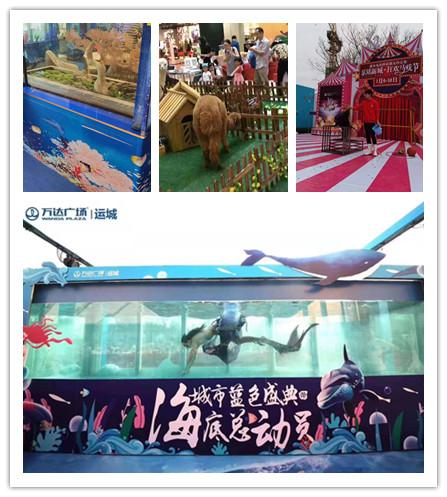丹阳市海狮企鹅表演出租哪里有