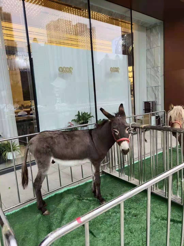 饶河县马戏团表演出租