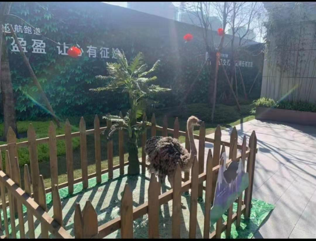 许昌市海狮表演出租