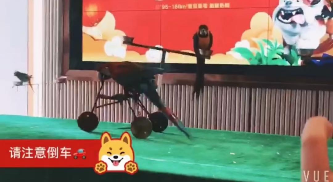 昆山市海狮表演企鹅租赁现有档期