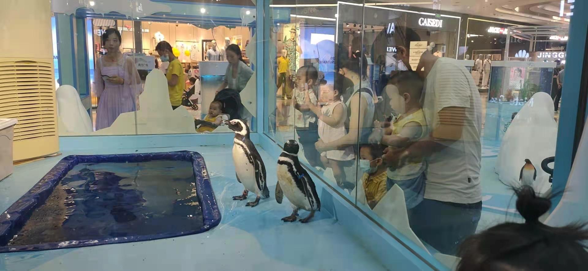 丰镇市海狮表演企鹅租赁哪家实惠 服务好