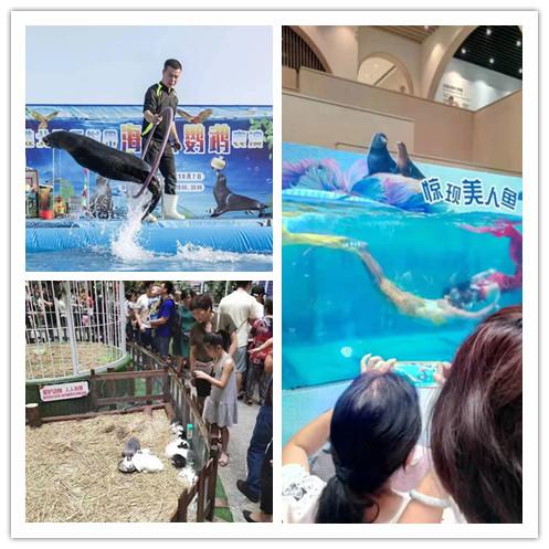福安市海洋生物鱼缸展出租