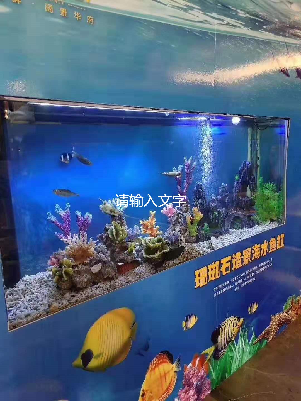 宁安市鱼表演出租
