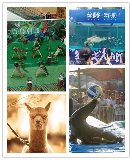 武冈市动物表演出租