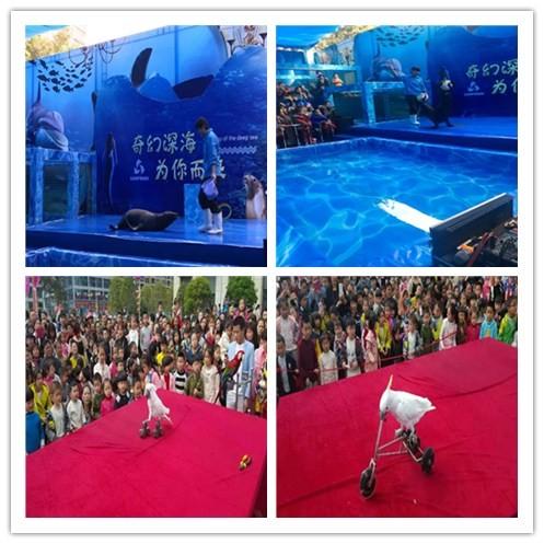 太原海狮演出租赁具体合作流程
