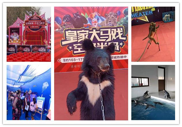 吴江市海狮企鹅表演出租哪里有