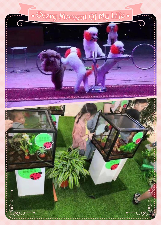 郑州市萌宠动物出租哪里有
